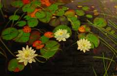 Pond_small